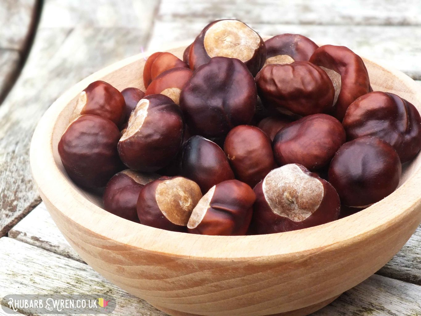 wooden bowl of shiny and wrinkly conkers for making conker comets