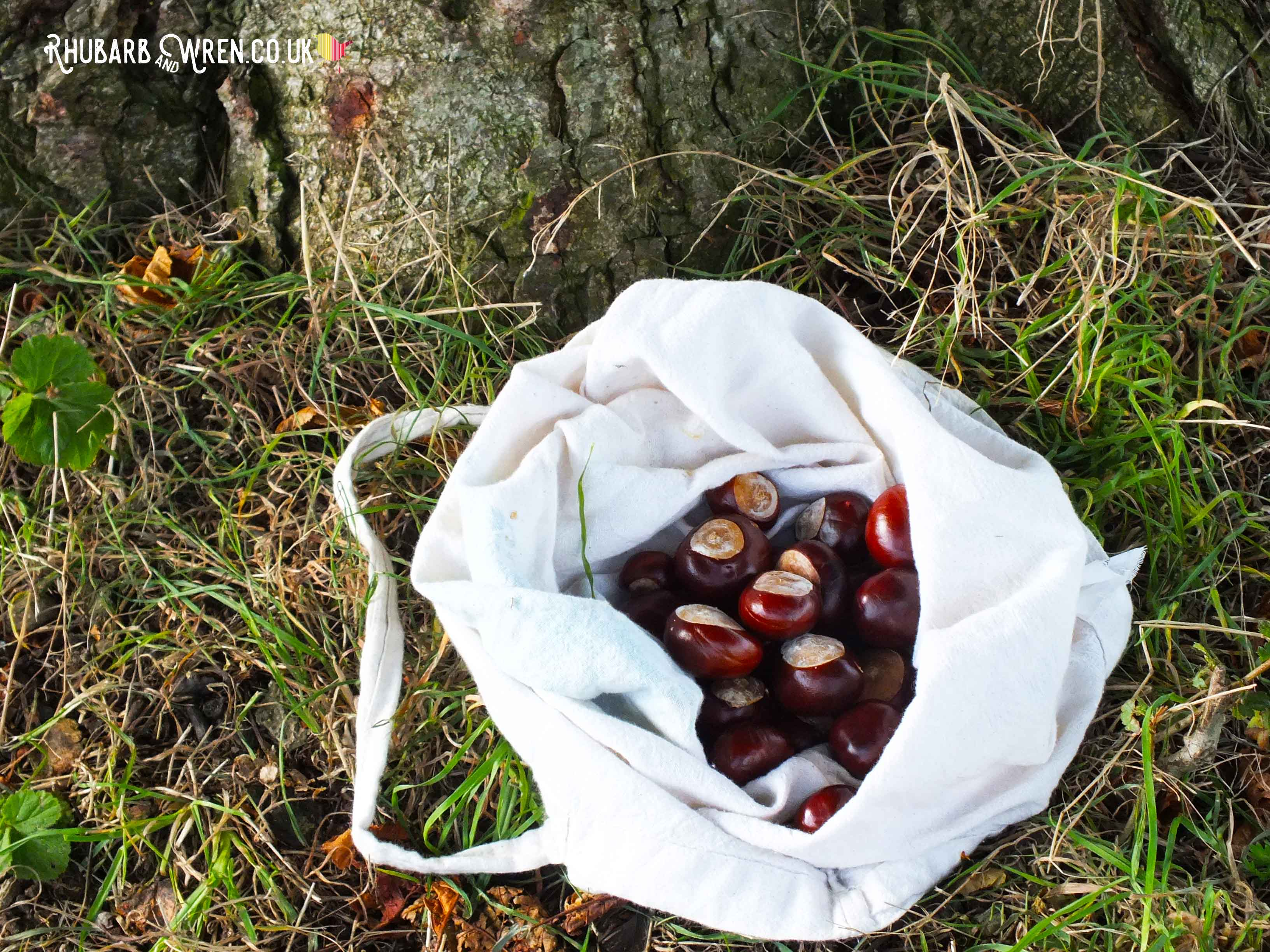 Canvas bag full of conkers lying at base of tree
