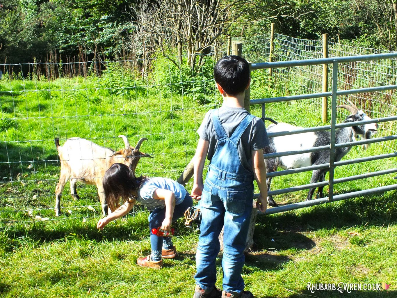 Two children feeding goats at Farrs Meadow campsite, Dorset, UK