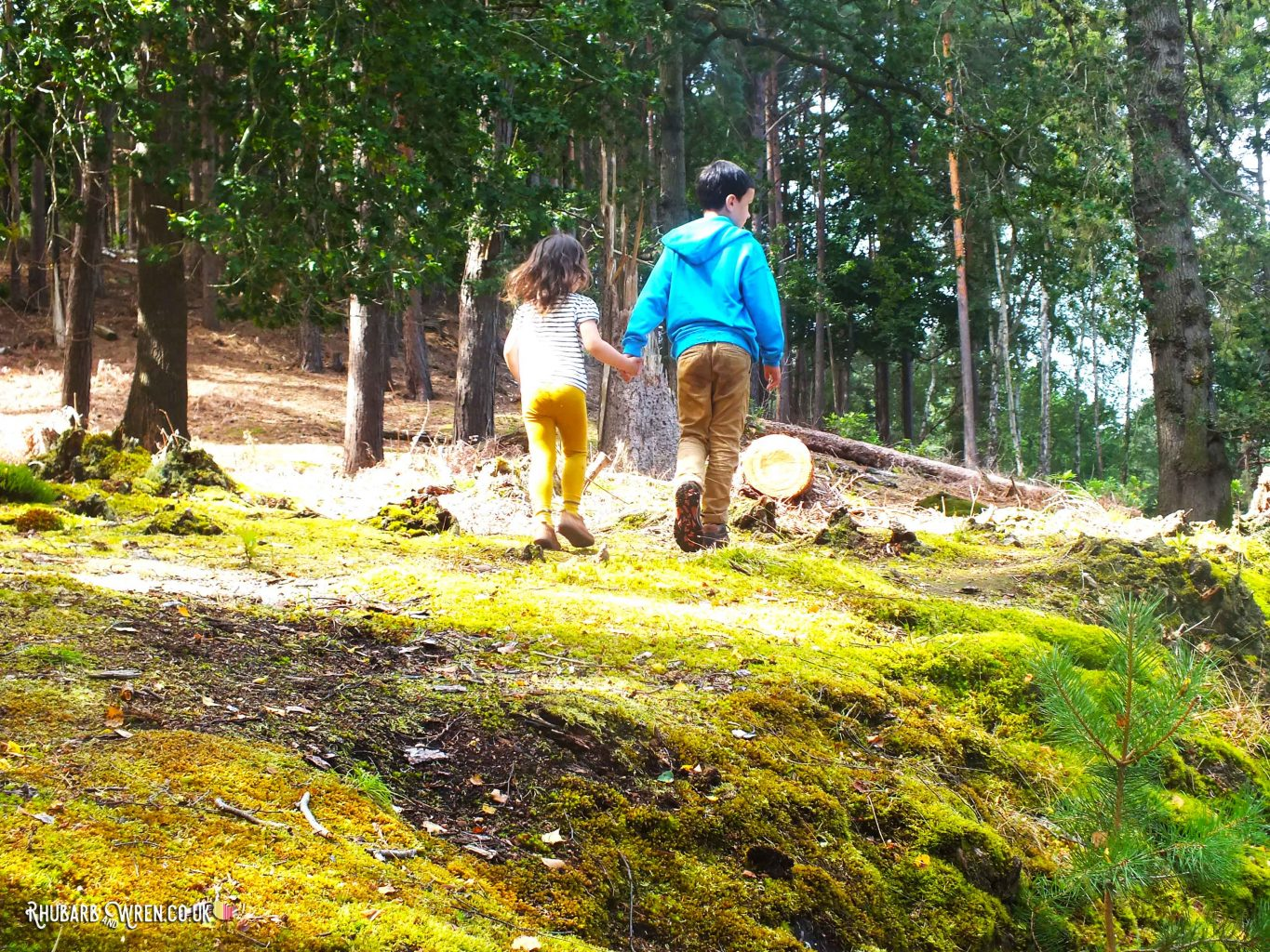 Children walking hand-in-hand through forest