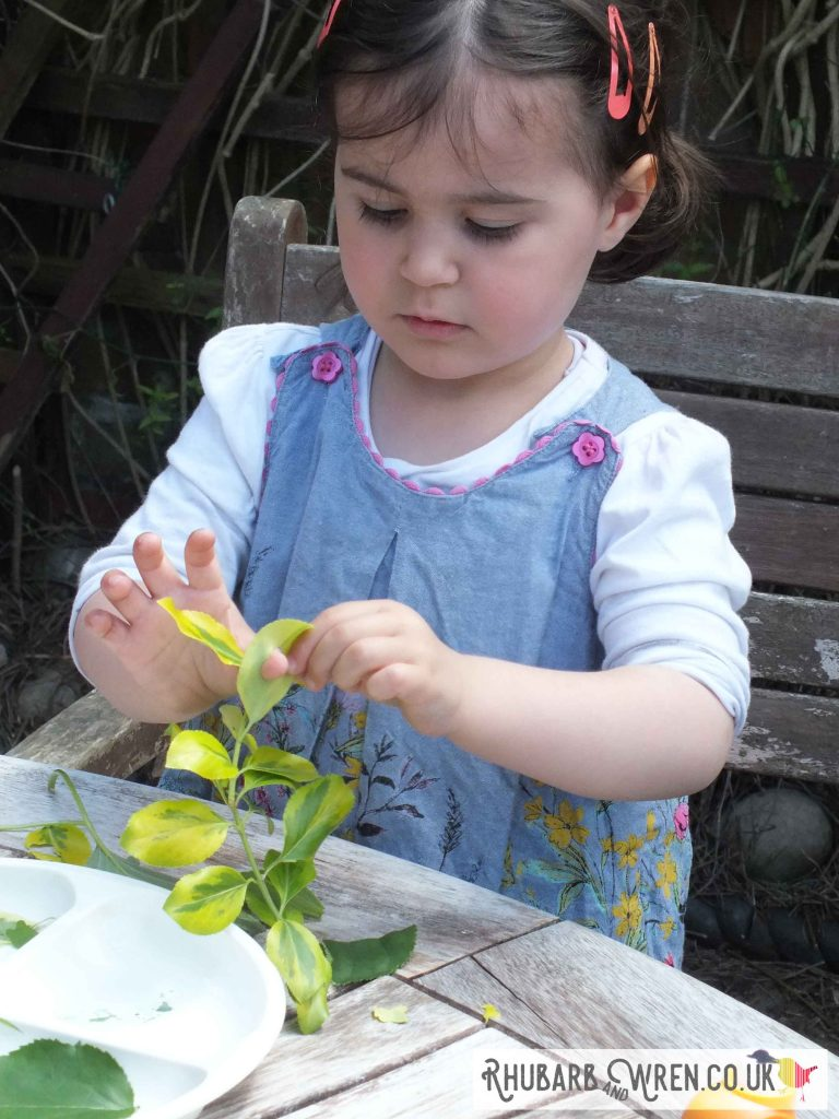 child examining leaves