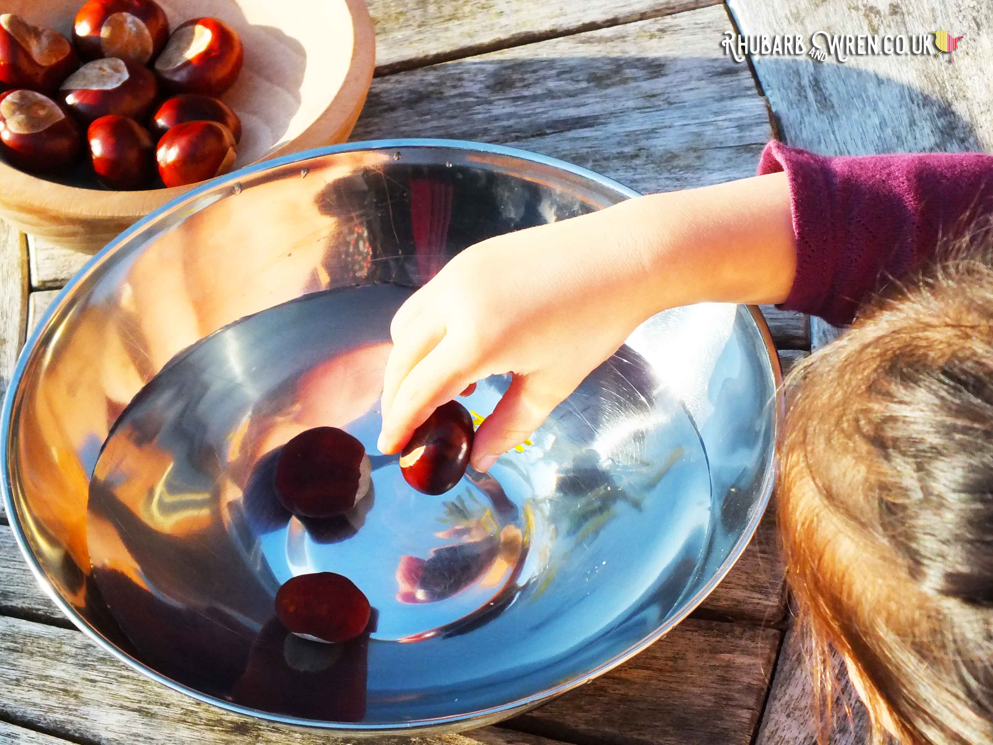 Girl dropping conker into bowl of water