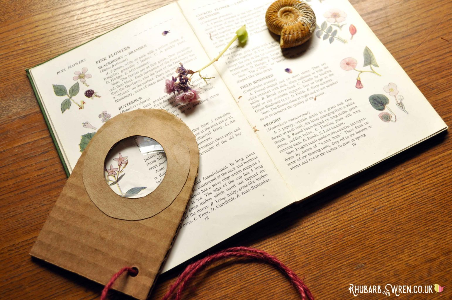 Using a cardboard real magnifying glass to look at a flower book.