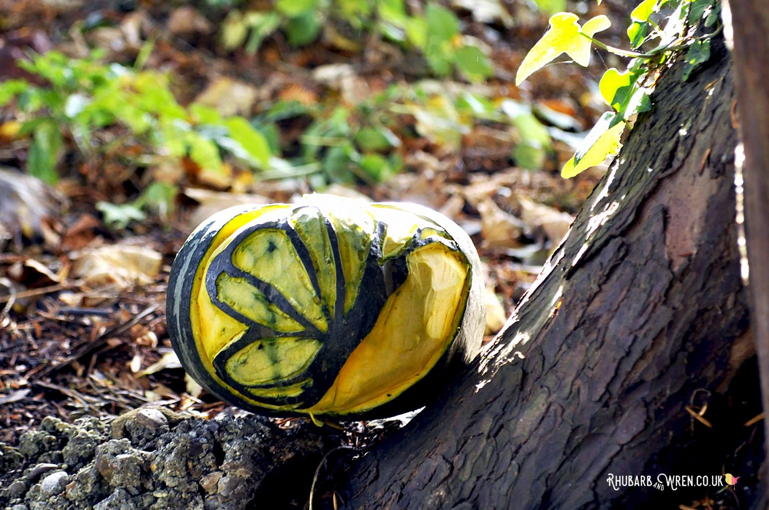 A butterfly pumpkin