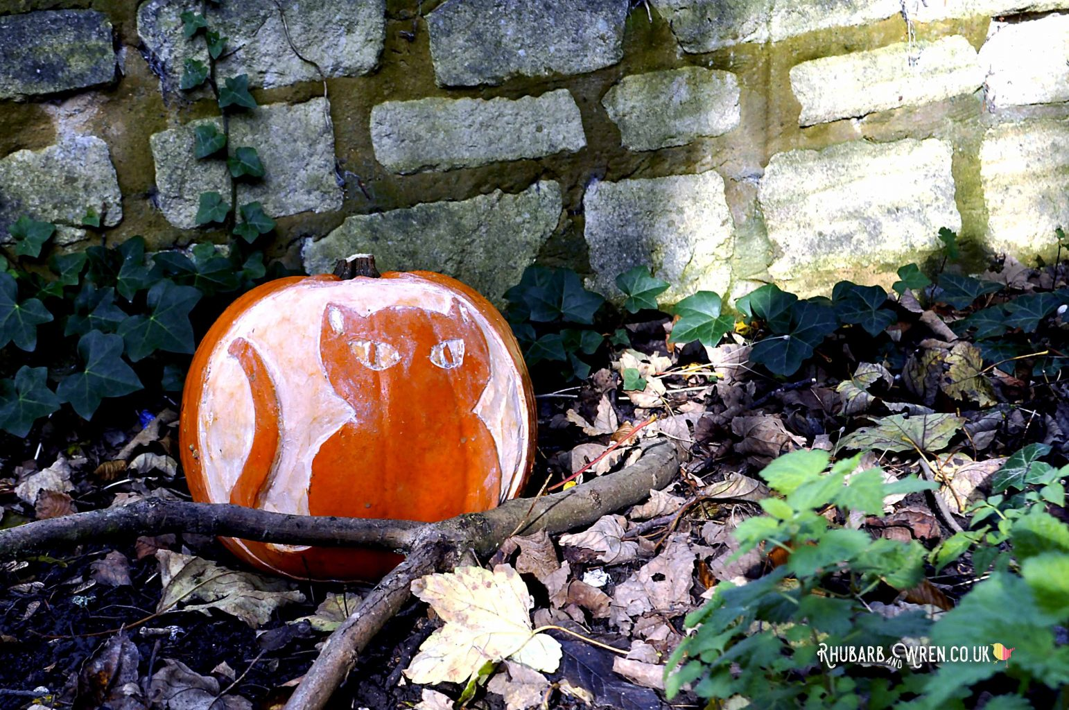 A cat carved on a pumpkin