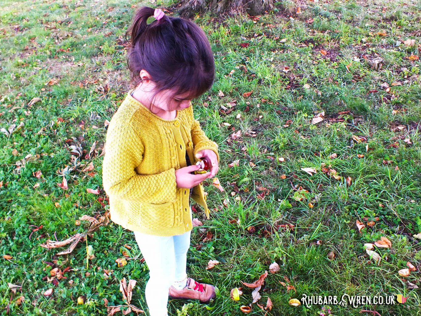 Foraging for conkers in the autumn